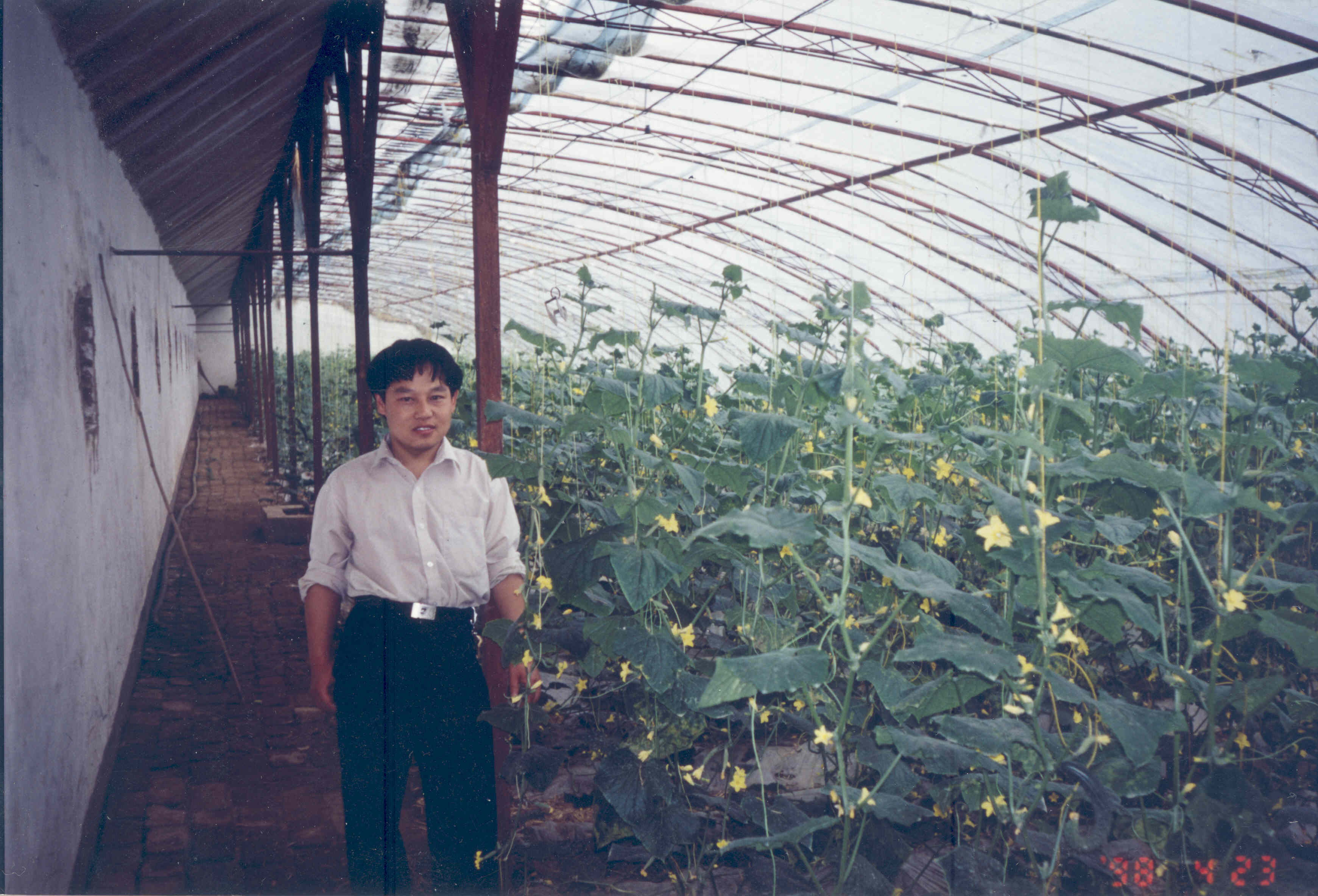 gu-in-chinese-greenhouse2