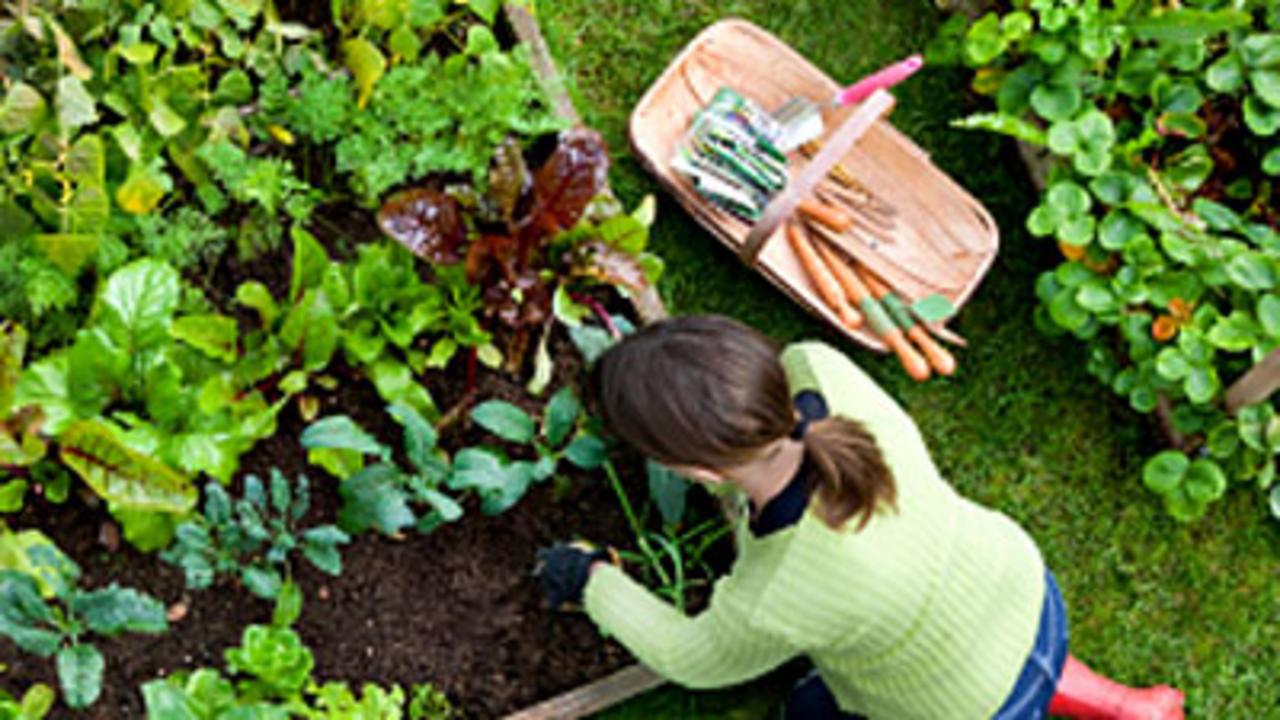 Что сажают в мае в огороде 7